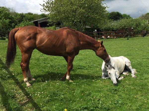 Simonsig enjoying the Sun with best mate Triolo D'Alene